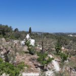 Climb up to the roof of the trullo and you should get a good view of the Valle d'Itria!