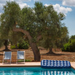 The earth in Puglia is a distinctive reddish colour - perfect for olive trees and vines